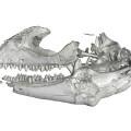 El-primer-lagarto-que-andaba-sobre-el-agua-vivio-hace-48-millones-de-anos_image_380