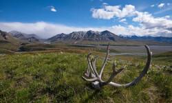 Island Tours_Extensiones Alaska ©Roberto Iván Cano
