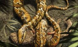 La-serpiente-primitiva-tenia-cuatro-patas-y-vivia-en-madrigueras_image_380