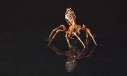Las-aranas-pueden-nadar_image_380