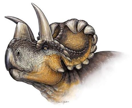Un-nuevo-dinosaurio-revela-la-evolucion-de-los-cuernos-en-los-Triceratops_image_380