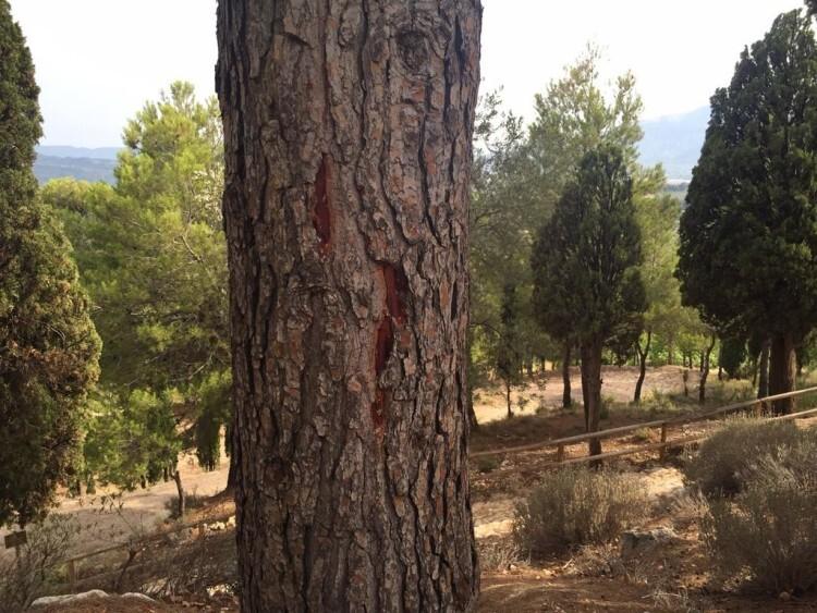 El tronco del árbol presenta las señales del paso del rayo.