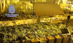 foto 1 marihuana