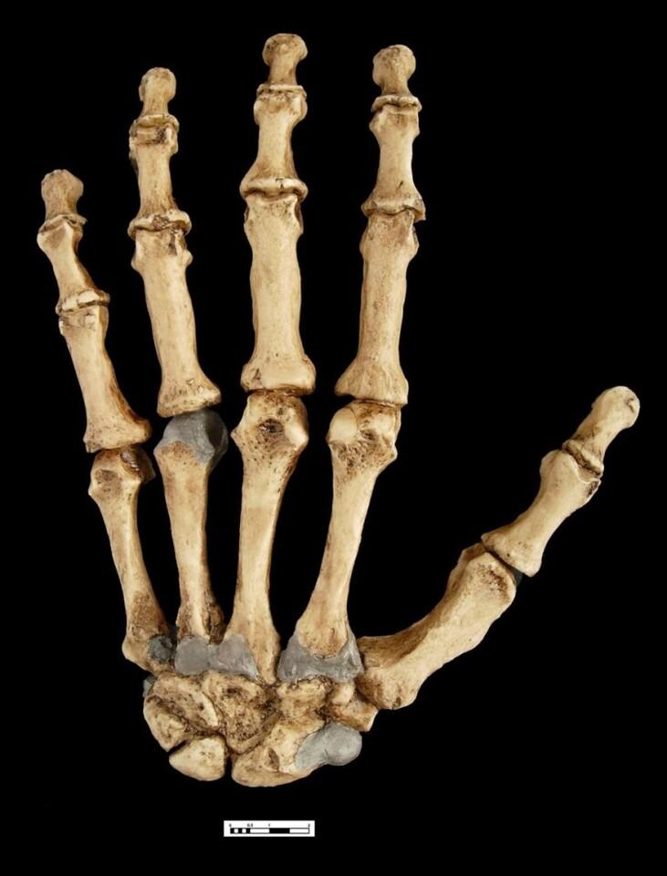 ma-neandertal-p