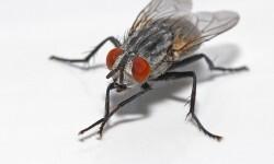 5-remedios-caseros-para-eliminar-las-moscas-del-hogar-840x662