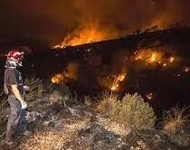 Casi 300 efectivos pasaron la noche luchando contra las llamas. (Foto-VLCNoticias)
