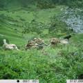 Casi-80-especies-de-vertebrados-consumen-la-carrona-de-la-caza_image_380