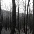 El fuego de Sierra de Gata está estabilizado y todos los evacuados vuelven a sus casas