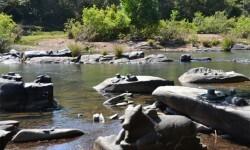 El tiempo seco revela río increíble con miles de Shiva Lingas Dry-Weather-Reveals-Amazing-River-With-Thousands-of-Shiva-Lingas (11)