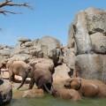 Elefantes en el Bioparc.