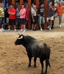 Fiesta del Bou al Carrer.