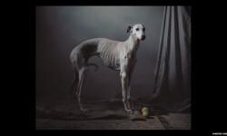Imágenes de los perros de caza abandonados en España (1)