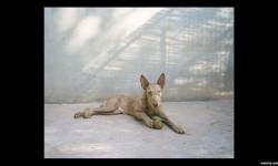 Imágenes de los perros de caza abandonados en España (10)