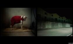 Imágenes de los perros de caza abandonados en España (4)