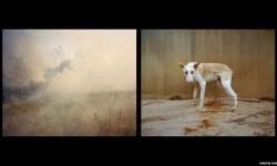 Imágenes de los perros de caza abandonados en España (6)