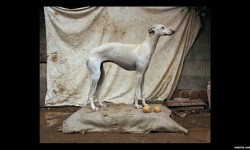 Imágenes de los perros de caza abandonados en España (7)