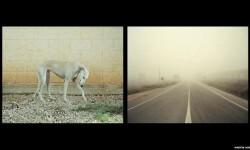Imágenes de los perros de caza abandonados en España (8)