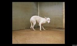 Imágenes de los perros de caza abandonados en España (9)