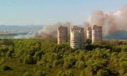 Incendio en una zona de El Saler. (Foto-Ayuntamiento de Valencia).