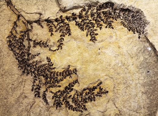 La-primera-planta-con-flor-aparecio-hace-130-millones-de-anos-en-Espana_image_380