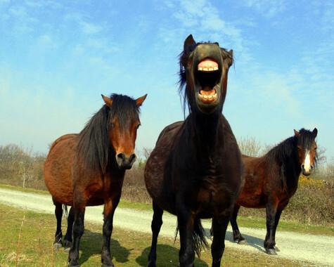 Los-caballos-y-los-seres-humanos-comparten-expresiones-faciales_image_380