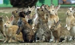 Por qué en realidad los conejos no se reproducen como conejos