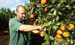 naranjas-tono-560x316