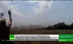 Video: estado de emergencia por invasión de langostas en Rusia