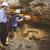 091015 Cueva Randero El equipo arqueológico del MARQ descubre una vasija intacta de más de 5.000 años de antigüedad en Pedreguer (1)