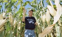 Agricultor-en-campo-maiz.-Foto-cedida-por-Syngenta