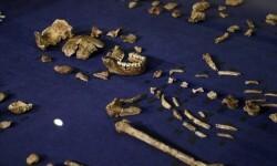Descubren en Sudáfrica al 'Homo naledi', nuevo ancestro del hombre.