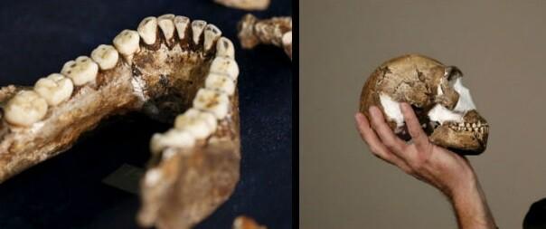 La especie podría tener una antigüedad de 2,5 a 2,8 millones de años.