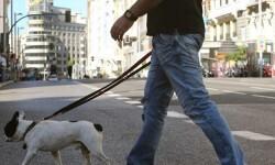 Más de 285.000 personas viajaron gratis en Metrovalencia y el TRAM de Alicante y Castellón en el 'Día sin Coche'.