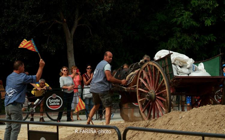 Primeras jornadas del XI Concurso de Tiro y Arrastre Ciudad de Valencia (12)