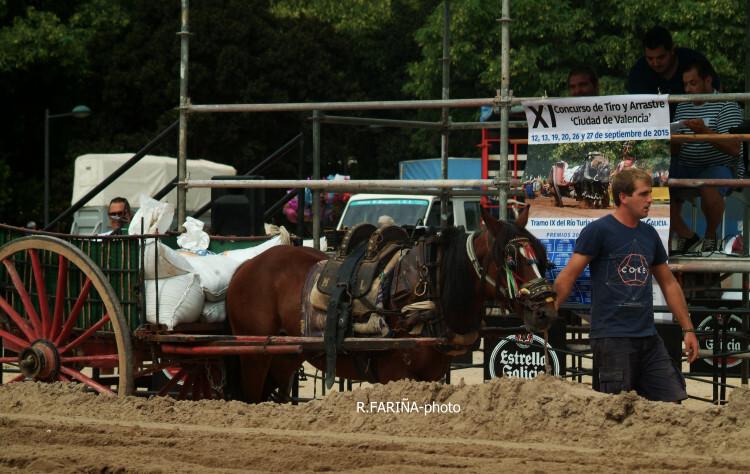 Primeras jornadas del XI Concurso de Tiro y Arrastre Ciudad de Valencia (13)