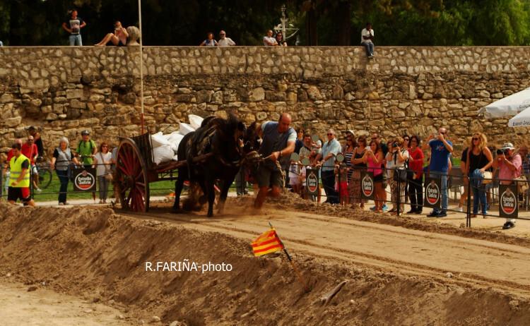 Primeras jornadas del XI Concurso de Tiro y Arrastre Ciudad de Valencia (19)