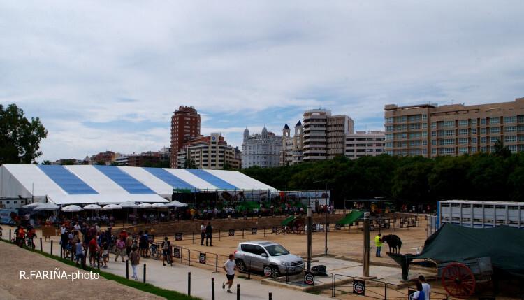 Primeras jornadas del XI Concurso de Tiro y Arrastre Ciudad de Valencia (3)