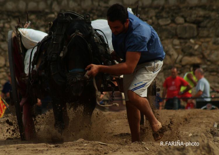 Primeras jornadas del XI Concurso de Tiro y Arrastre Ciudad de Valencia (6)