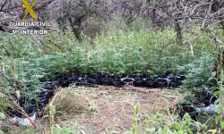 5f560-marihuana-smagdalena-oct15