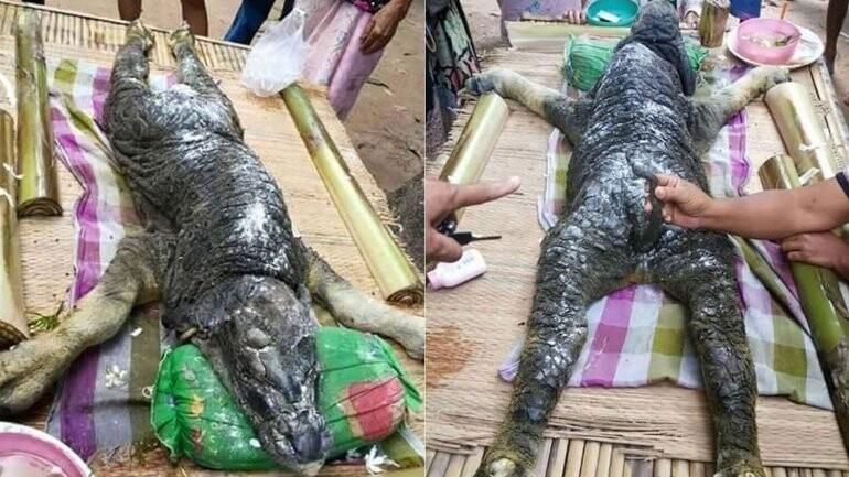 Animal salvaje , Tailandia, bestia (1)