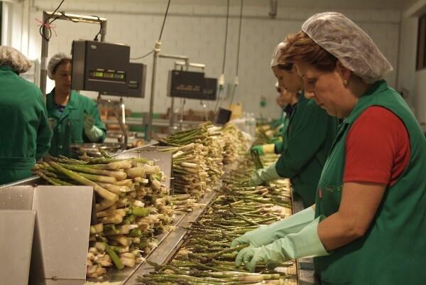 Cooperatives Agro-alimentàries destaca la inclusión de la mujer en las áreas decisivas de las cooperativas.