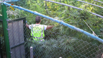 Doce detenidos tras la incautación de 87 kilos de marihuana en Godelleta, Chiva y Turís guardia civil (3)