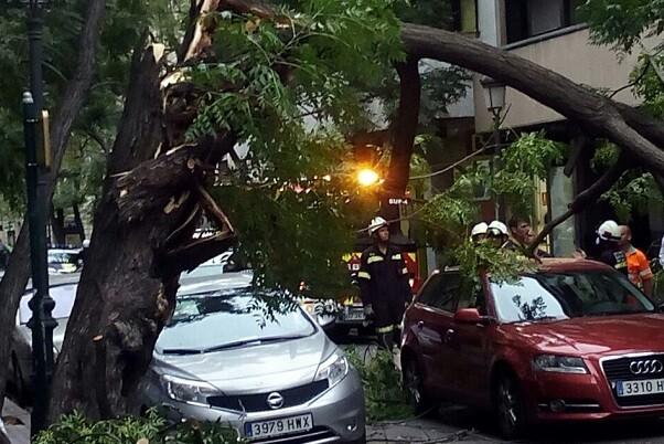 Las fuertes rechas de viento hacen caer el tronco de un árbol en la calle Sorni. (Foto-Valencia Noticias). (2)