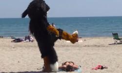 Remi-Gaillard-disfrazado-de-perro