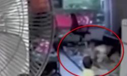 Video  una niñera brutal pateó a la bebé que debía cuidar   Buscar con Google