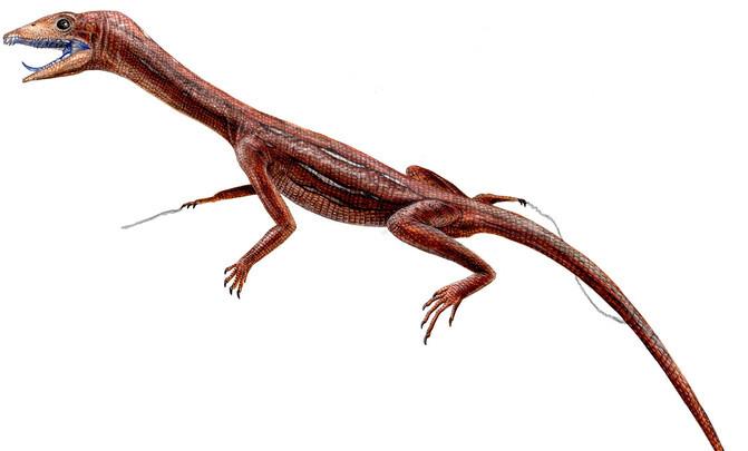 1_langobardisaurus_image671_405
