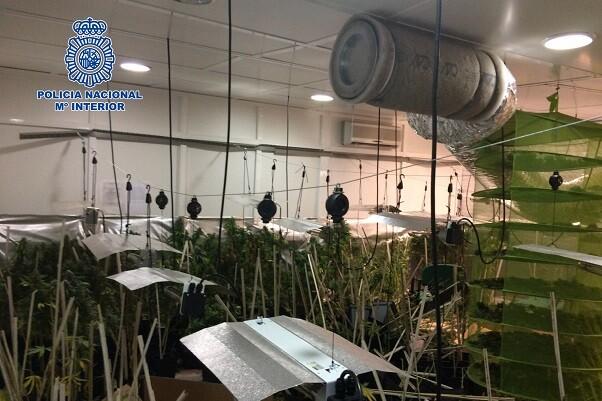 Desmantelada en Jerez de la Frontera una nave destinada al cultivo y procesamiento  de marihuana.