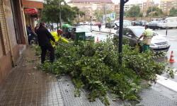 Destrozos por el viento en Valencia 02 nov 2015 (18)