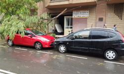 Destrozos por el viento en Valencia 02 nov 2015 (21)