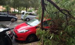 Destrozos por el viento en Valencia 02 nov 2015 (24)